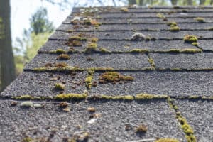 close up of roof shingles with algae damage; roofing warranties